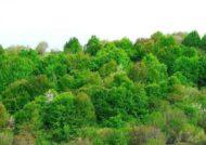 جنگل زیبای فندقلو