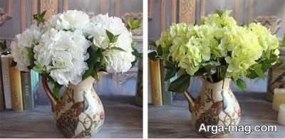 نگهداری از گل جذاب هورتانسیا