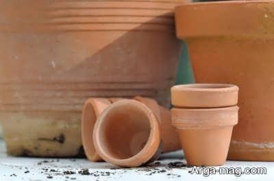 تعویض گلدان برای رشد بهتر گیاه