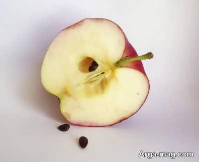 چگونگی کاشت هسته سیب برای سبزه عید