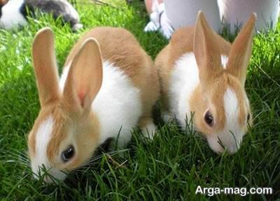تعبیر دیدن خرگوش نشانه چه چیزی می باشد ؟