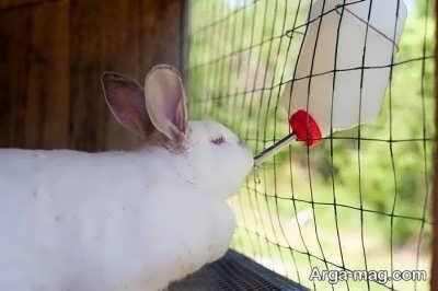 تغذیه خرگوش ها چگونه است؟