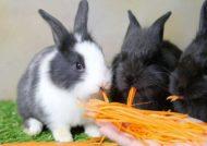 بهترین غذای خرگوش