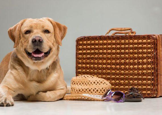 مسافرت کردن با حیوان خانگی