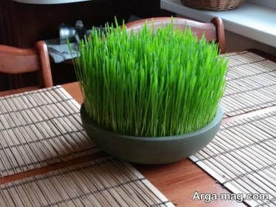 استفاده از ظروف سفالی برای کاشت بذرهای گندم