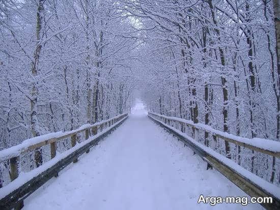تصویر جذاب و خاص از مناظر زمستانی