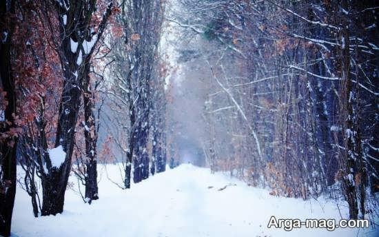 مناظر جذاب و متفاوت زمستان