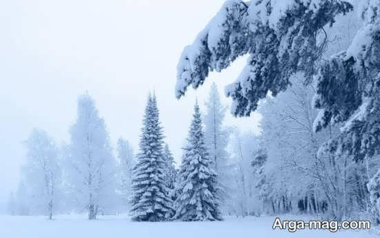 تصویر متفاوت و جدید طبیعت زمستانی