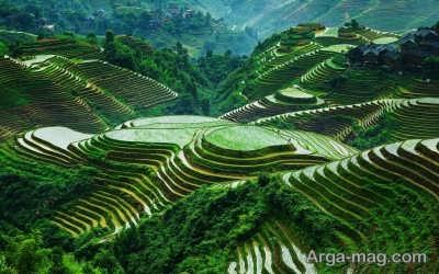 بازدید از مزارع پلکانی برنج