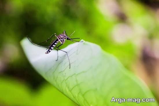از بین بردن حشرات گلدان