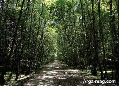 پارک جنگلی فین در چالوس