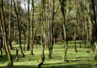پارک جنگلی در شمال کشور
