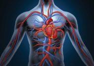 افزایش یافتن گردش خون