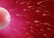 تلقیح داخل رحمی اسپرم چیست؟
