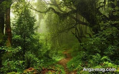 تعبیر انواع خواب جنگل