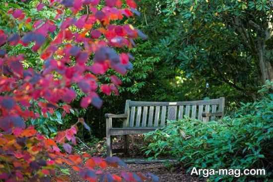 باغ کالینینگراد
