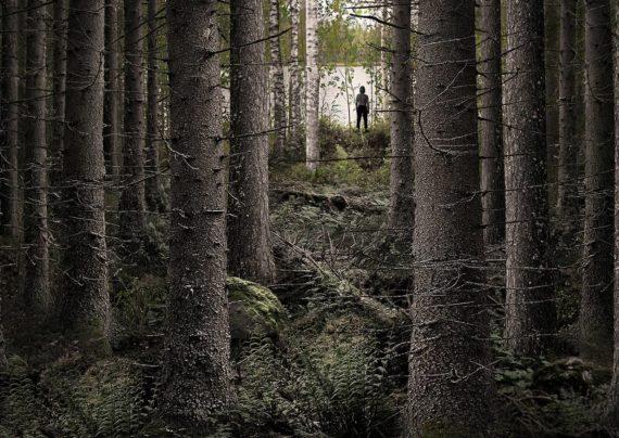 اقدامات لازم در هنگام مواجه با گم شدن در جنگل