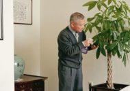 آشنایی با روش های نگهداری پاچیرا در خانه