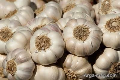 مراحل کاشت سیر در گلدان