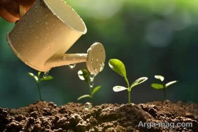 فراهم کردن شرایط لازم برای رشد گیاه