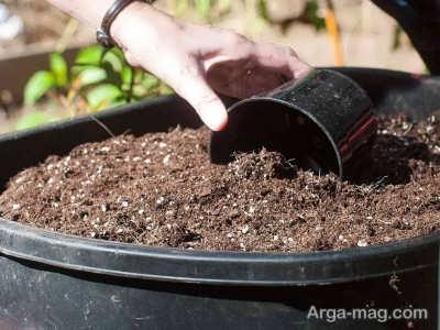 استفاده از خاک مرغوب برای پرورش گیاه فیتونیا