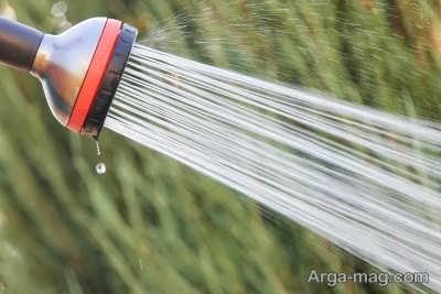 آبیاری منظم گیاه برای رشد بهتر