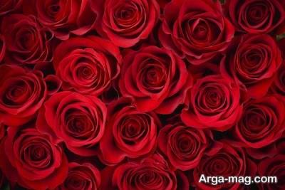 تبریک روز ولنتاین با جمله های عاشقانه