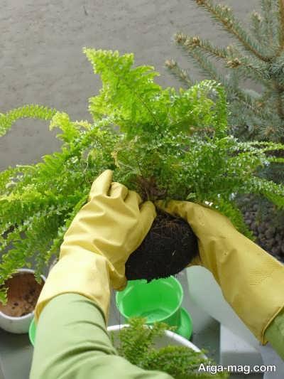 تعویض گلدان گیاه برای متوقف نشدن روند رشد