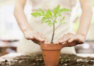 روش های مختلف تعویض گلدان گیاه