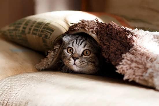 عکس پروفایل گربه زیبا و ناز برای واتساپ