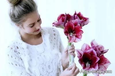 مراقبت و نگهداری از گل آماریلیس