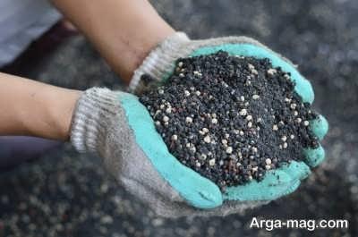 کوددهی منظم گیاه برای رشد بهتر