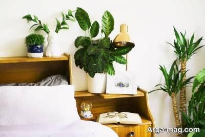 چند نوع گیاه برای اتاق خواب
