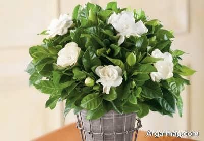 انواع گل و گیاه مناسب برای اتاق خواب