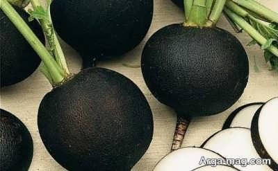 انواع خواص ترب سیاه