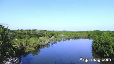 پارک رودخانه در کشور گامبیا