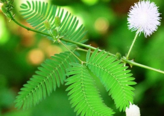 راهکارهای نگهداری گل قهر و آشتی
