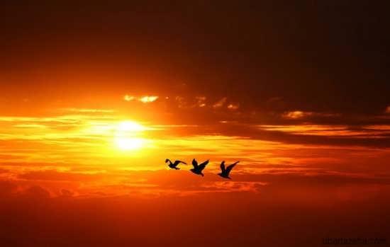 عکس جدید غروب آفتاب برای پروفایل