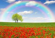 آشنایی با انواع متنوع منظره دشت گل های متنوع