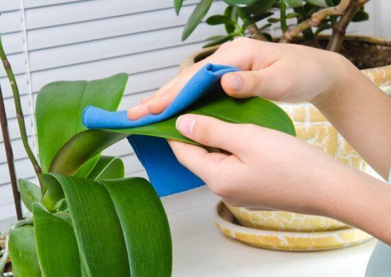 راهکار های تمیز کردن گل مصنوعی