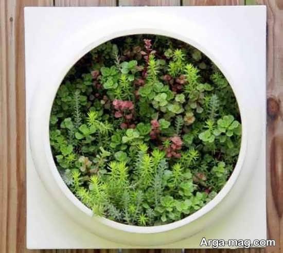 مدلی زیبا از باغچه عمودی در منزل