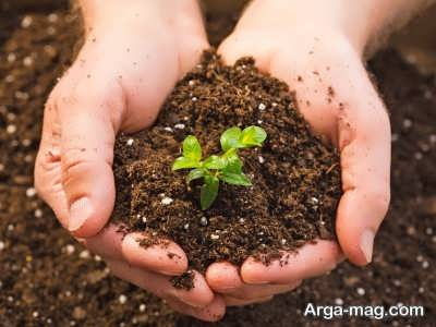 شرایط مورد نیاز برای پرورش گیاه گزنه
