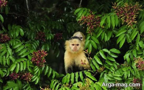 اطلاعات راجع به کشور پاناما