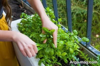 ابزار لازم برای کاشت سبزی در خانه