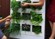 سبزی کاری در آپارتمان ها و اصول آن