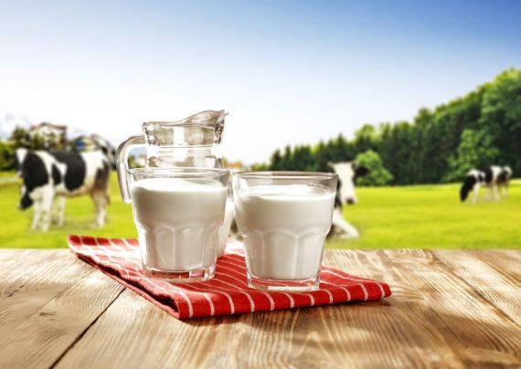خواص شیر گاومیش بر سلامت بدن