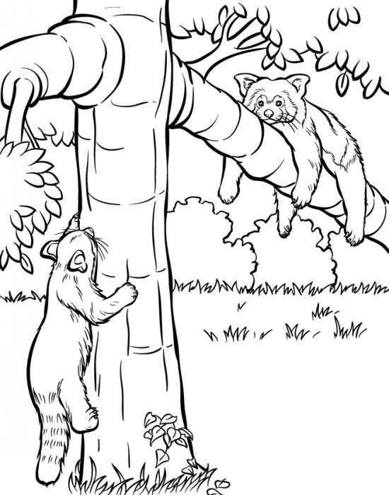 نقاشی پاندای سرخ برای بچه ها