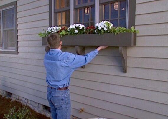 آشنایی با گل های مناسب پشت پنجره