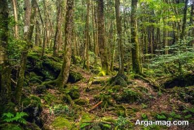 بازدید از جنگل آئوکیگاها در ژاپن