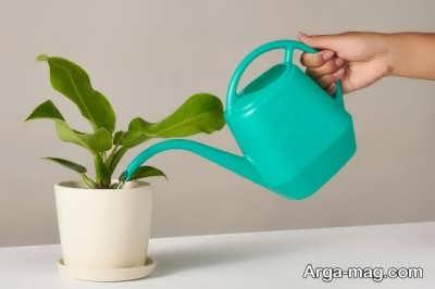 عواملمهم در روند آبیاری گیاهان